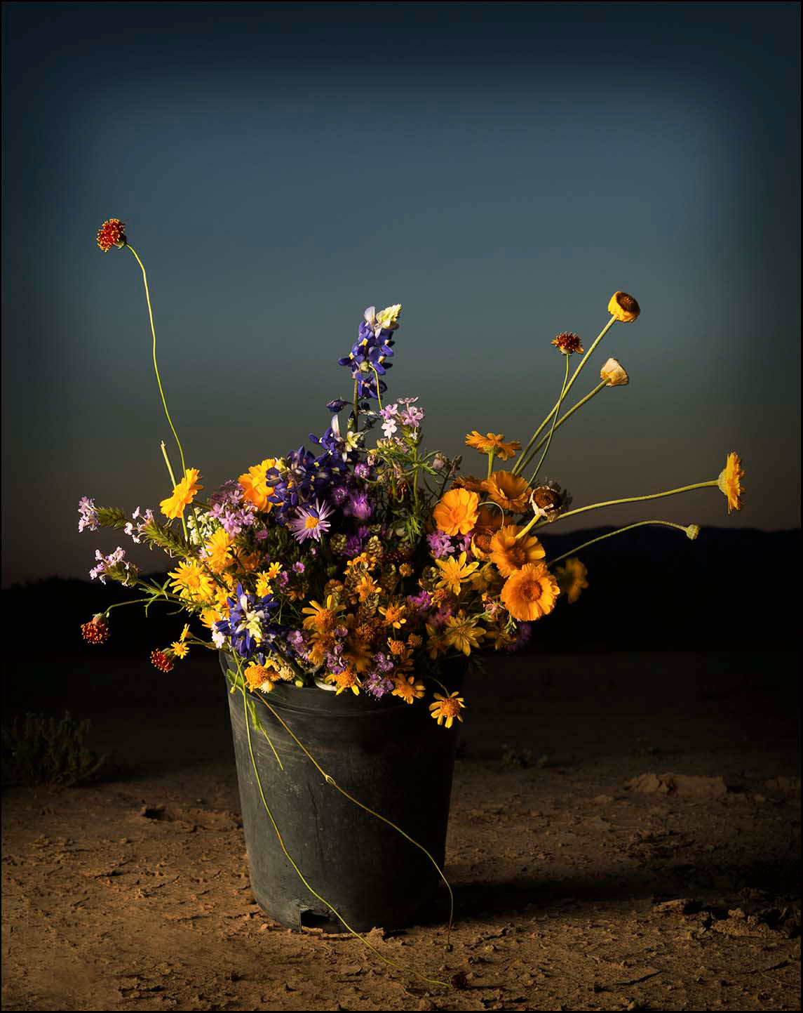 Bucket-of-Flowers