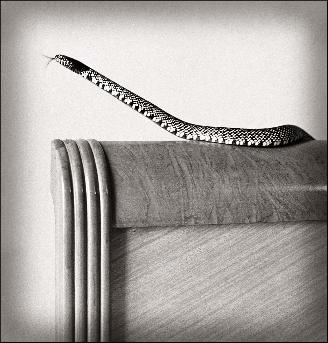 King Snake on Headboard