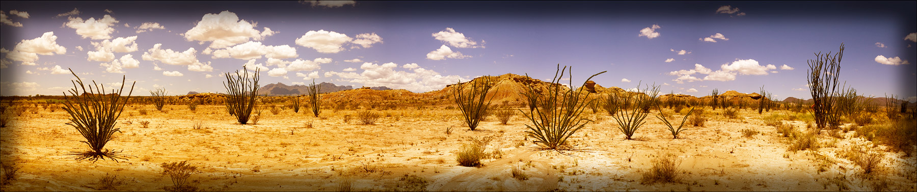 Ocotillo-Pamoramic_web
