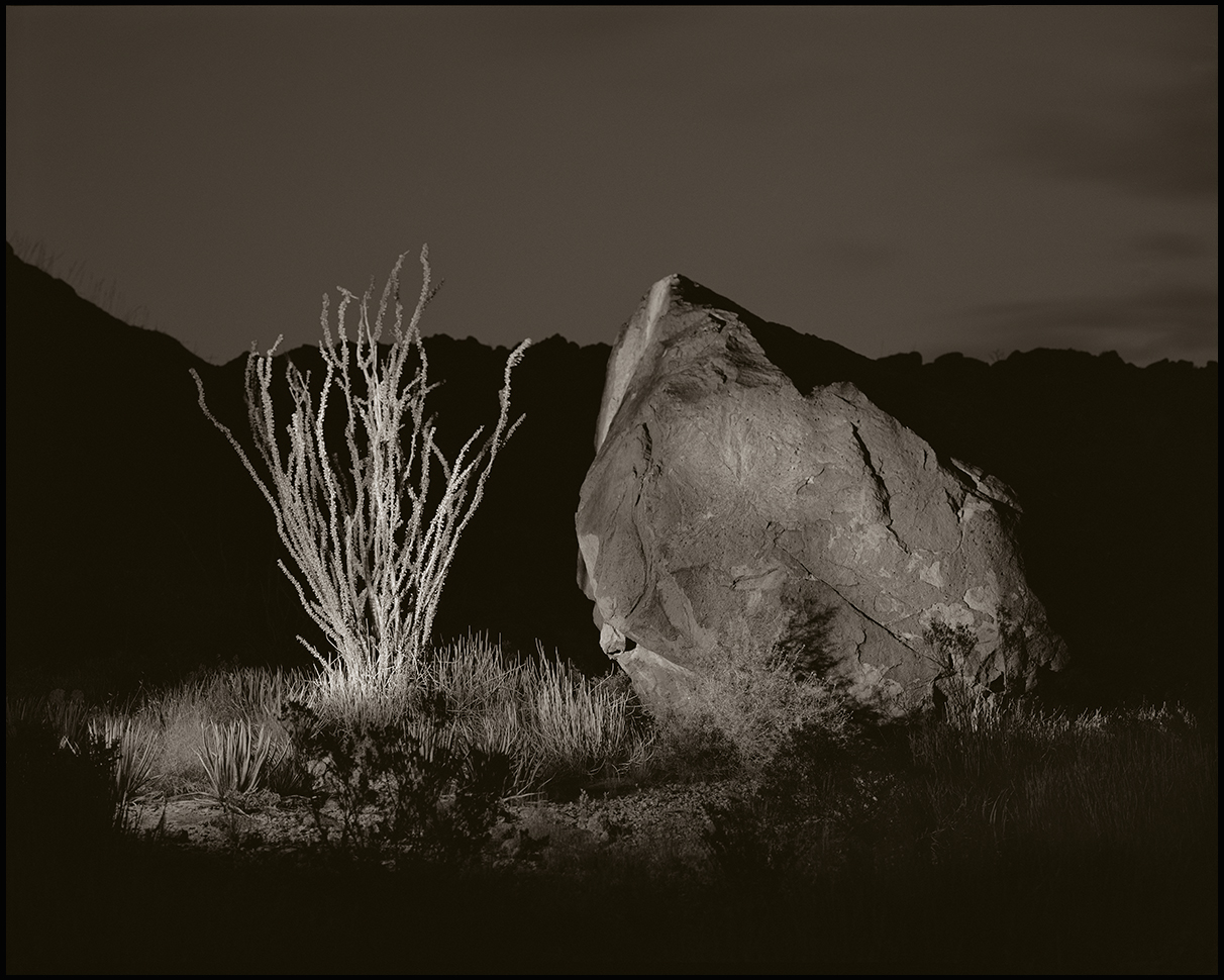 © James-H-Evans-Ocotillo and Rock