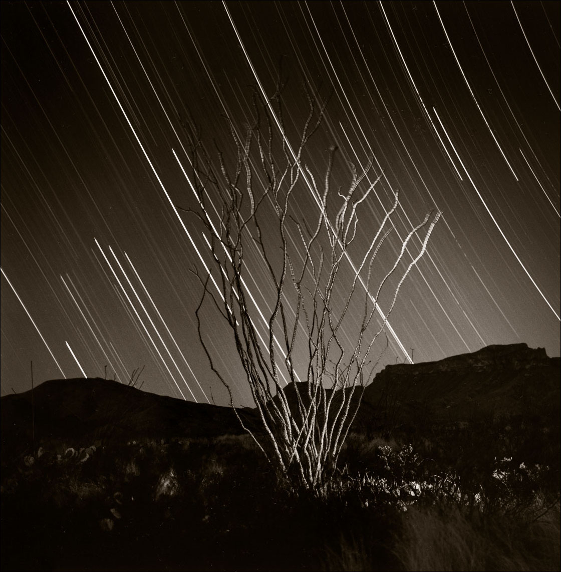 © James-H-Evans-Ocotillo and StarTrails