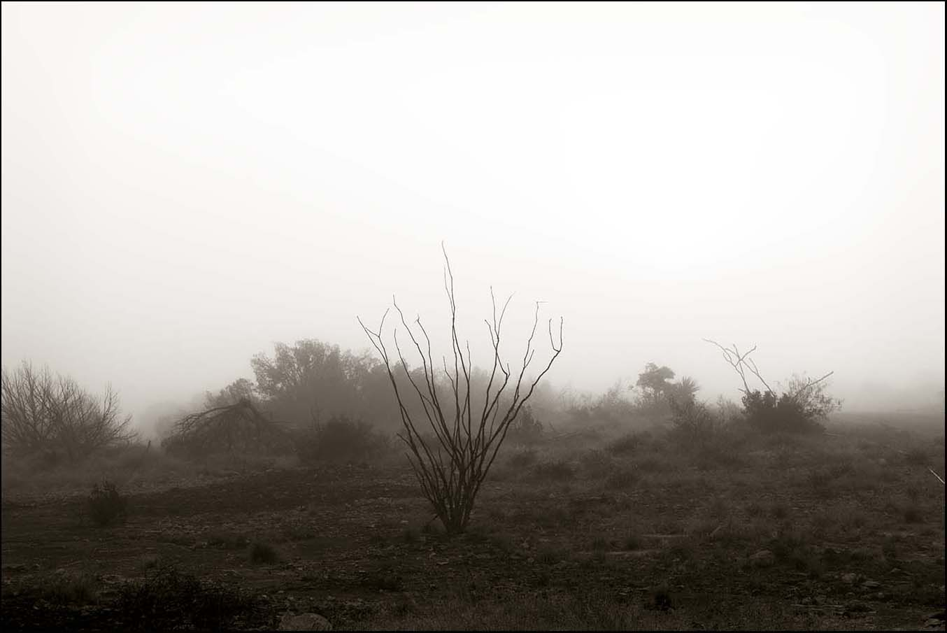 © James-H-Evans-Ocotillo in Fog