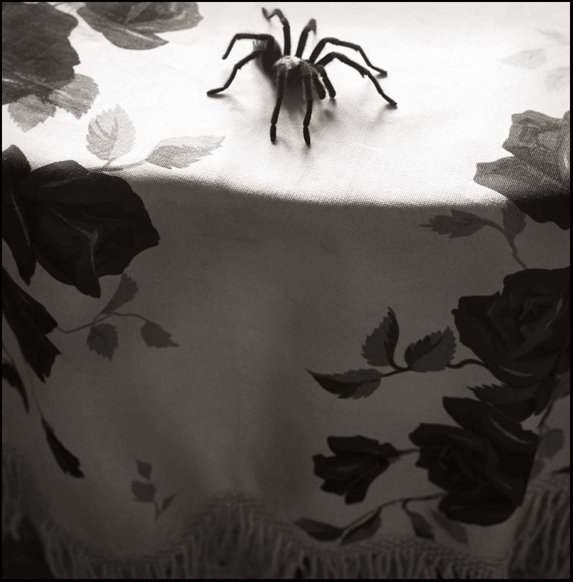 Tarantula and Tablecloth